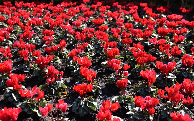 f:id:flowerTDR:20181109085448j:image