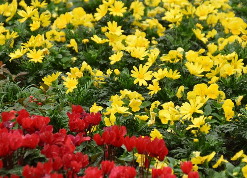f:id:flowerTDR:20181113080503j:plain