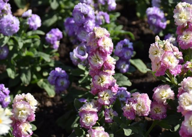 f:id:flowerTDR:20181211093818j:image