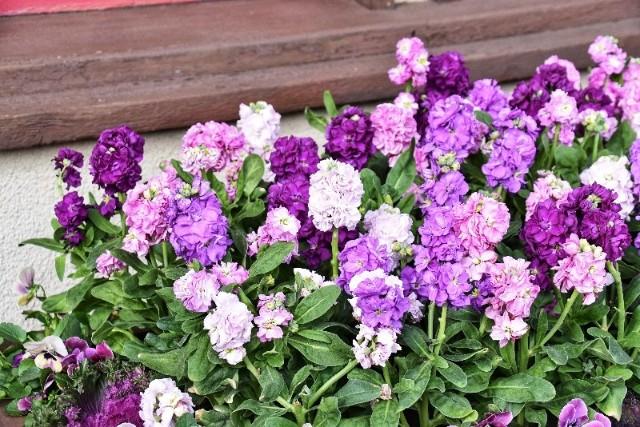 f:id:flowerTDR:20181212091503j:image