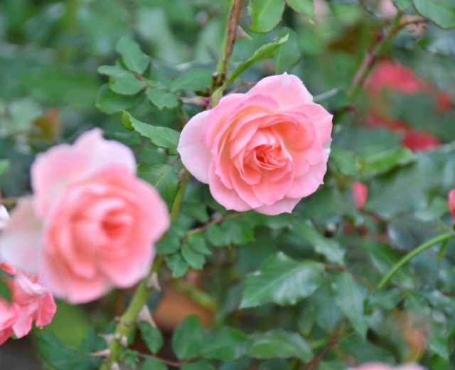 f:id:flowerTDR:20181214091139j:image