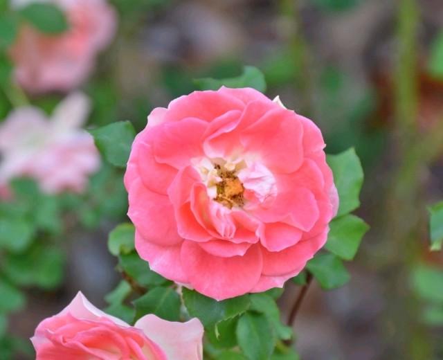 f:id:flowerTDR:20181214091146j:image