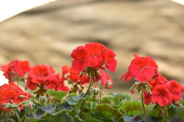 f:id:flowerTDR:20181222085728j:image