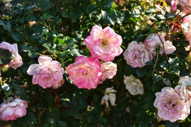f:id:flowerTDR:20181224090612j:image