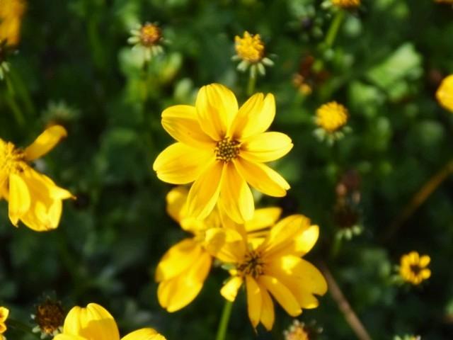 f:id:flowerTDR:20181225091001j:image