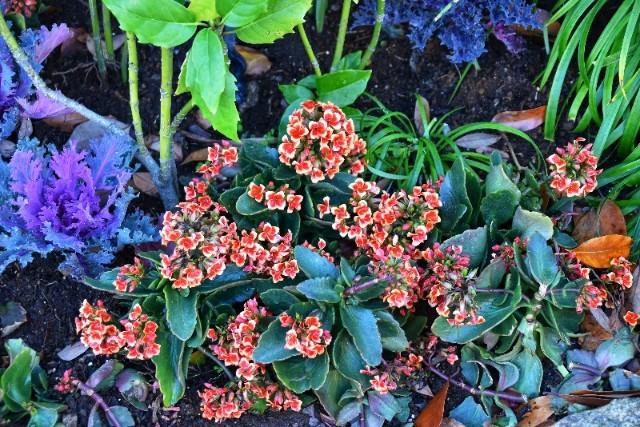 f:id:flowerTDR:20181226103357j:image