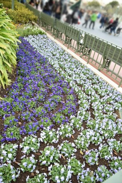 f:id:flowerTDR:20181227090938j:image