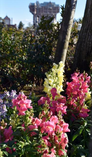 f:id:flowerTDR:20190106104157j:image