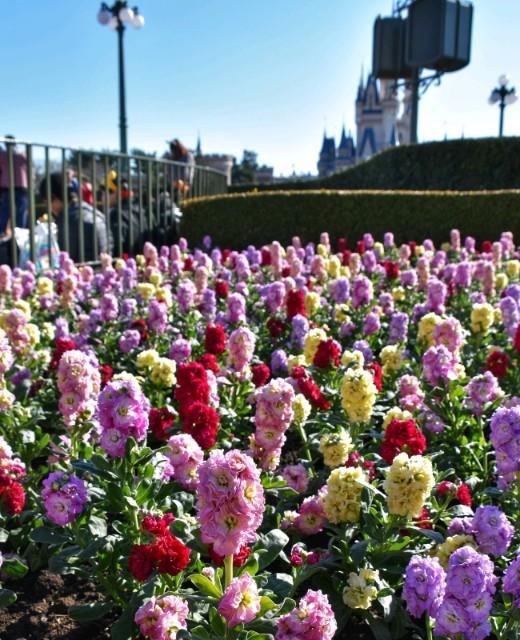 f:id:flowerTDR:20190109085159j:image