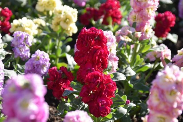 f:id:flowerTDR:20190109085207j:image