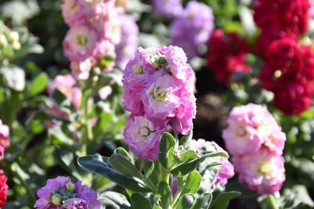 f:id:flowerTDR:20190109085218j:image