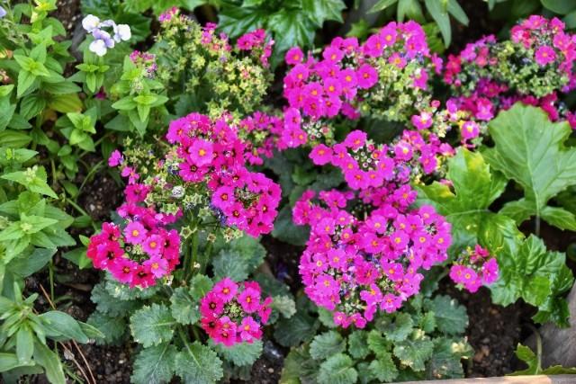 f:id:flowerTDR:20190112092318j:image