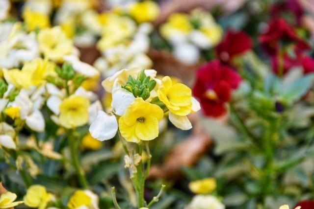 f:id:flowerTDR:20190114070715j:image