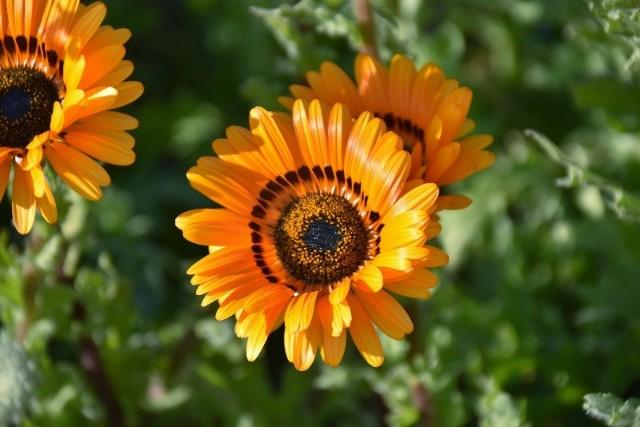f:id:flowerTDR:20190118073732j:image