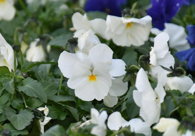 f:id:flowerTDR:20190122092244j:plain