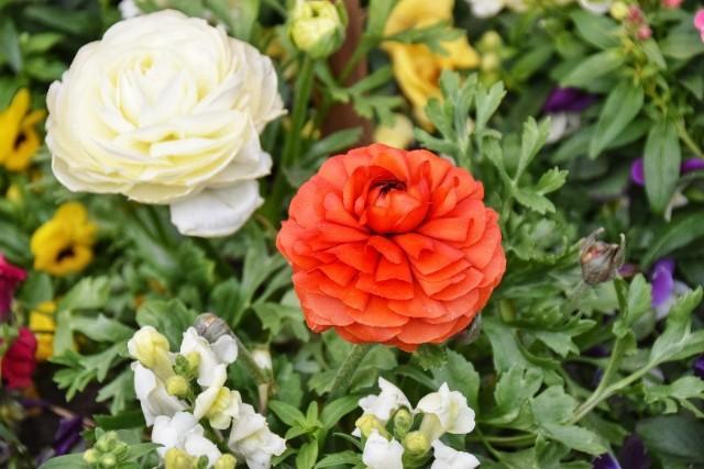 f:id:flowerTDR:20190128090355j:image