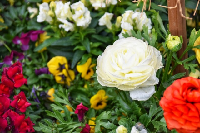 f:id:flowerTDR:20190128090413j:image