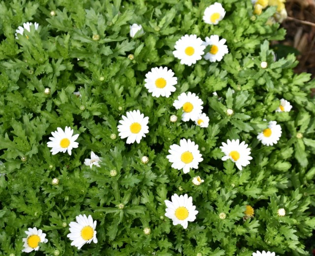 f:id:flowerTDR:20190217104549j:image