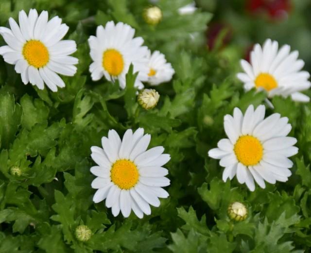 f:id:flowerTDR:20190217104605j:image