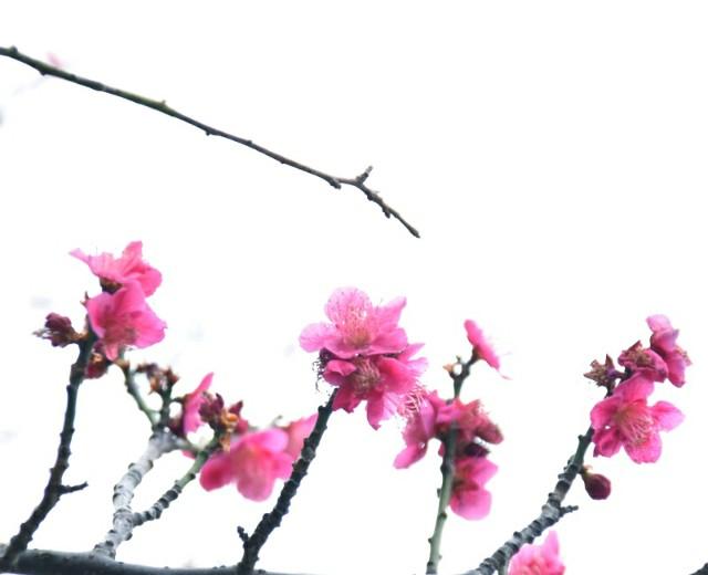 f:id:flowerTDR:20190301123126j:image