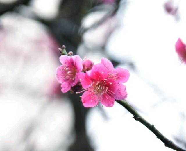 f:id:flowerTDR:20190301123159j:image