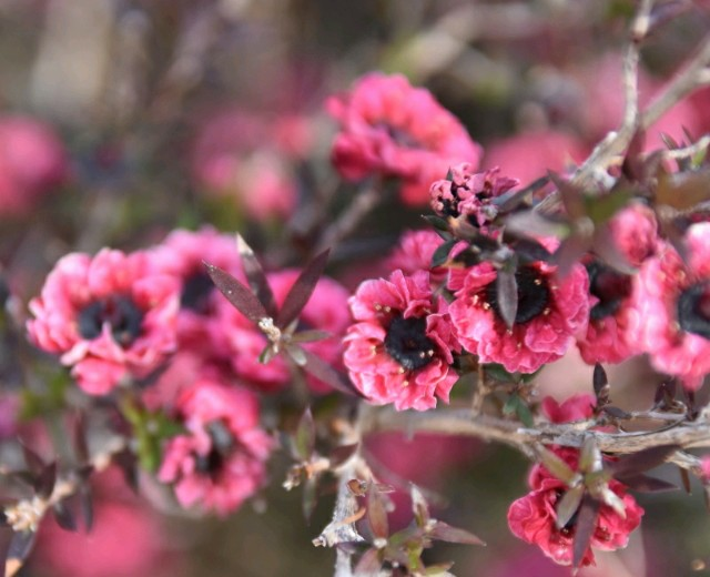 f:id:flowerTDR:20190303090301j:image