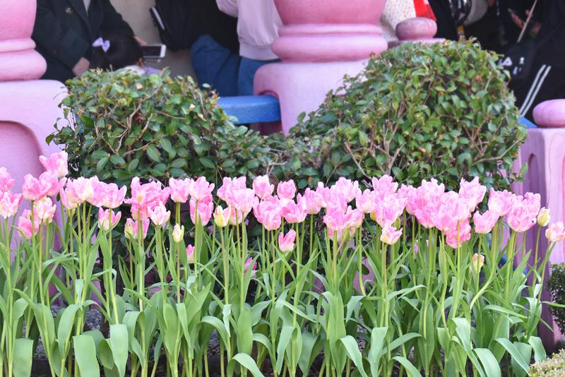 f:id:flowerTDR:20190317084951j:plain