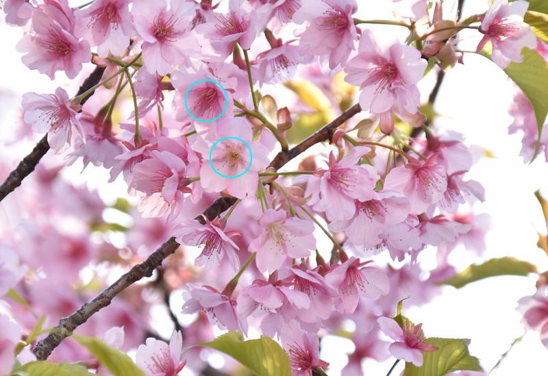 f:id:flowerTDR:20190317085031j:plain