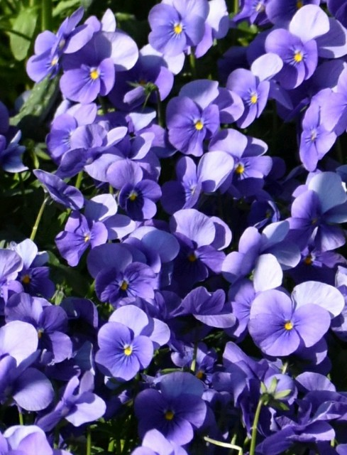 f:id:flowerTDR:20190319091239j:image