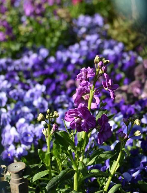f:id:flowerTDR:20190319091249j:image