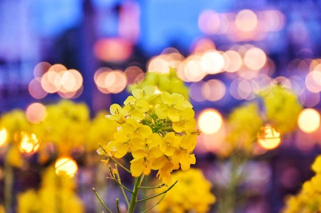 f:id:flowerTDR:20190319184444j:image