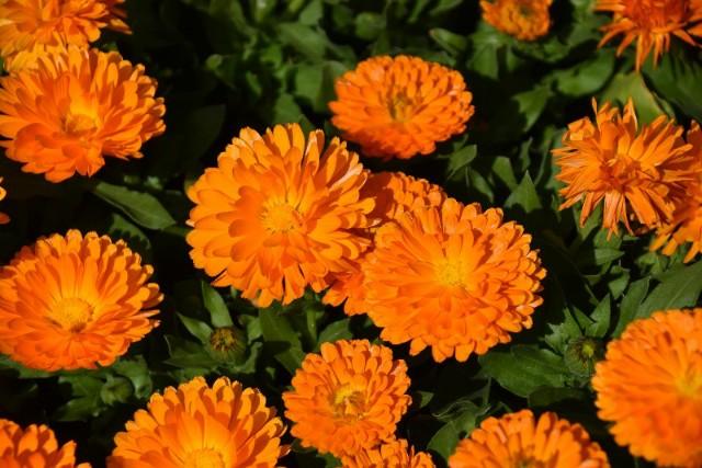 f:id:flowerTDR:20190322085728j:image