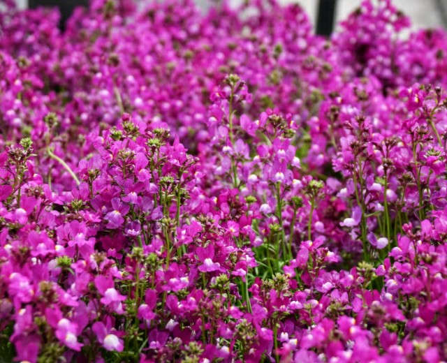 f:id:flowerTDR:20190324093030j:image