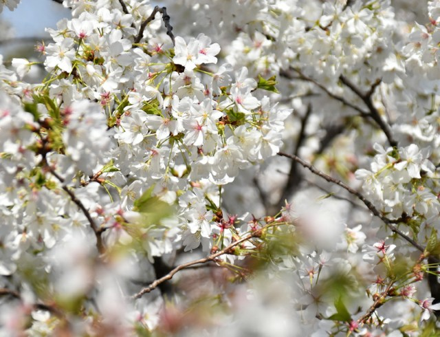 f:id:flowerTDR:20190328083127j:image