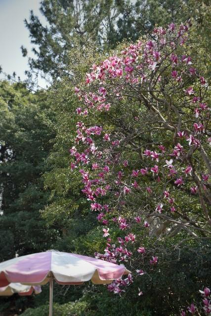 f:id:flowerTDR:20190329094959j:image