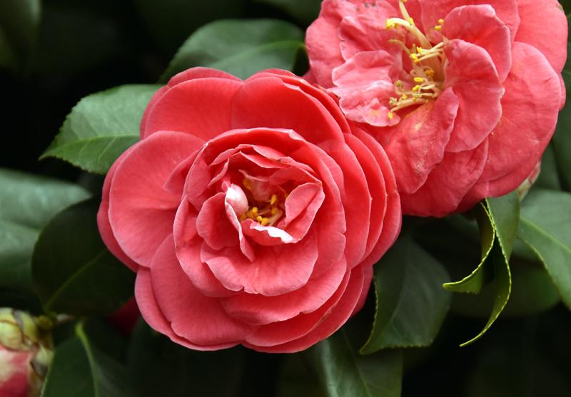 f:id:flowerTDR:20190330092409j:plain