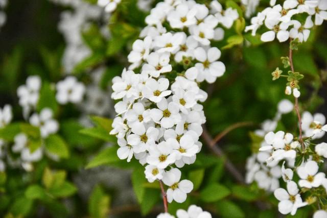 f:id:flowerTDR:20190331105309j:image