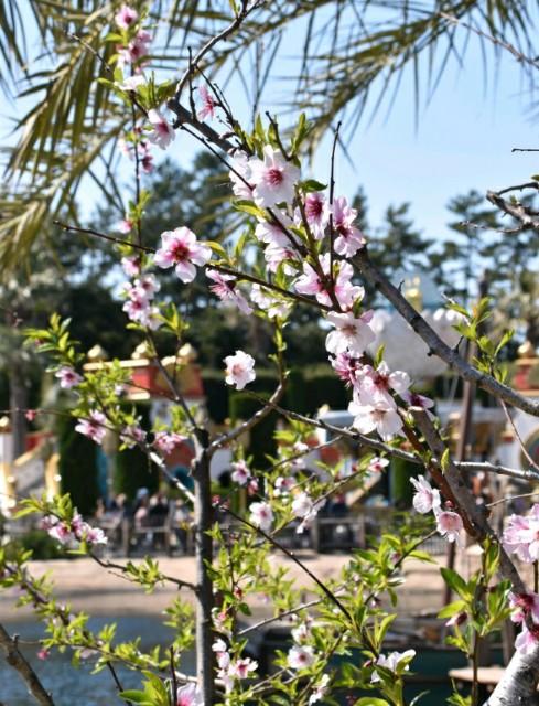 f:id:flowerTDR:20190405115745j:image