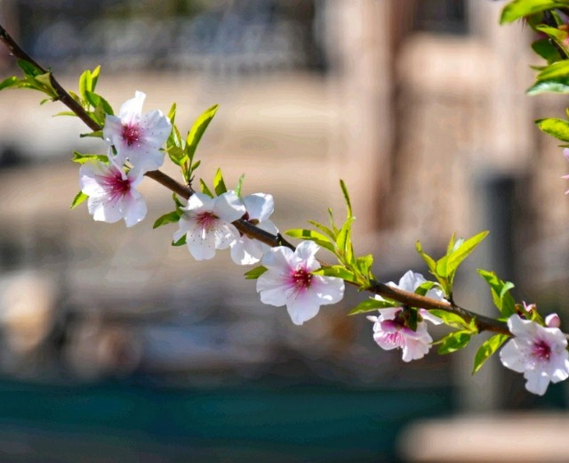 f:id:flowerTDR:20190405115912j:image