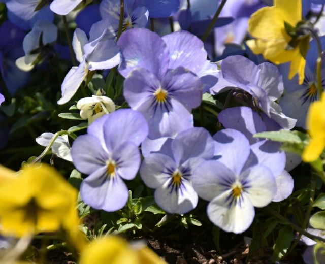f:id:flowerTDR:20190407092803j:image