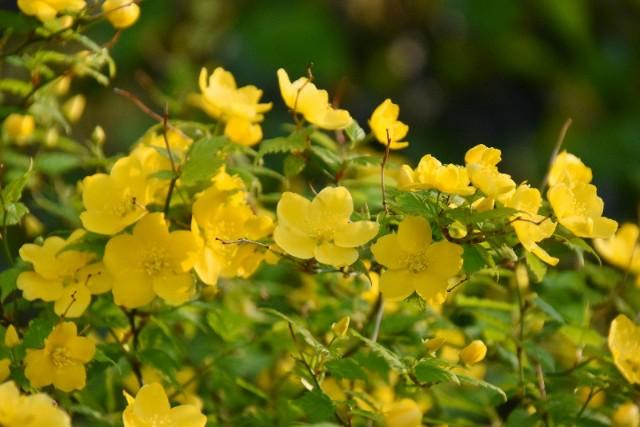 f:id:flowerTDR:20190409082446j:image