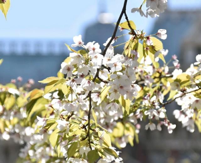 f:id:flowerTDR:20190410091453j:image