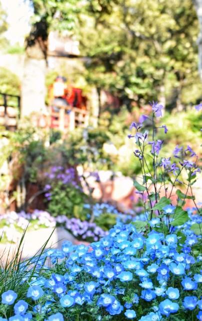 f:id:flowerTDR:20190411072008j:image