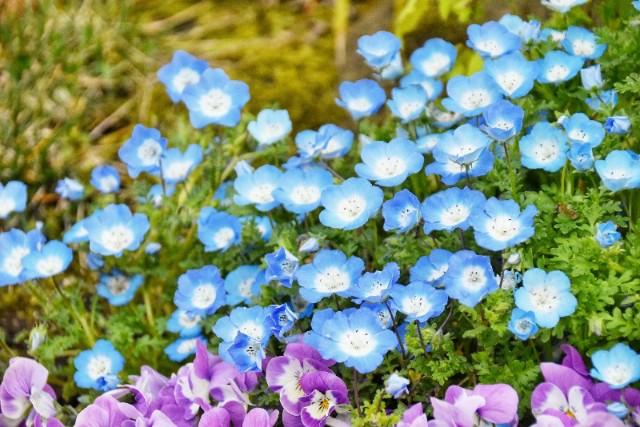 f:id:flowerTDR:20190411072020j:image