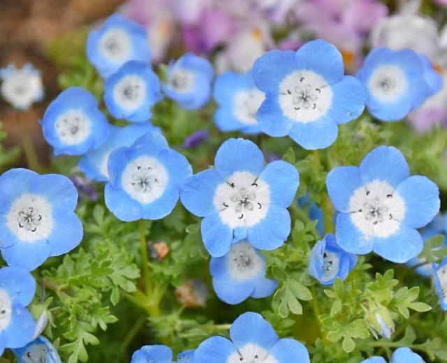 f:id:flowerTDR:20190411072028j:image