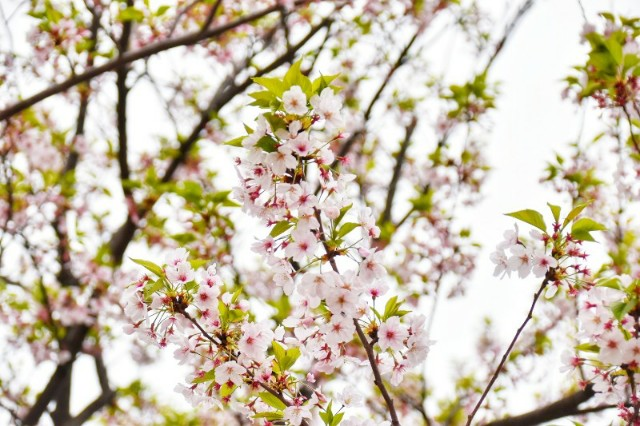 f:id:flowerTDR:20190417155115j:image