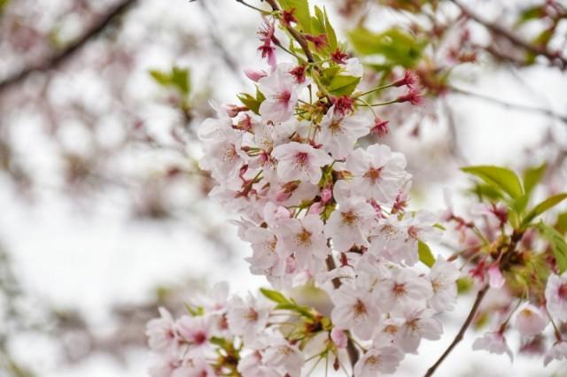 f:id:flowerTDR:20190417155122j:image