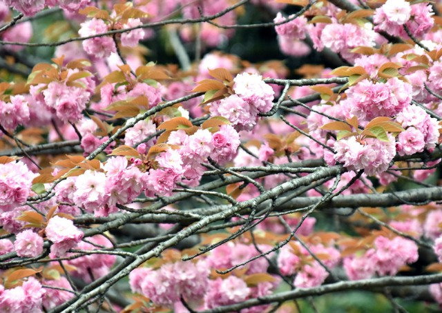 f:id:flowerTDR:20190418060816j:image
