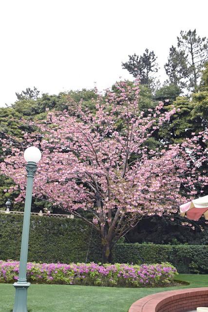 f:id:flowerTDR:20190418060827j:image