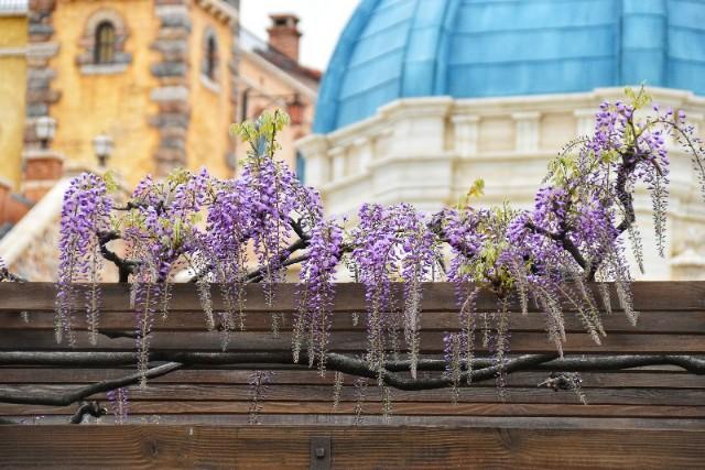 f:id:flowerTDR:20190422085325j:image